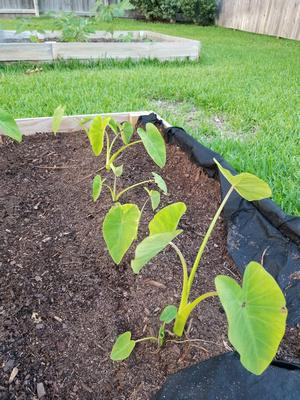 Gardening - May 2018 &emdash;